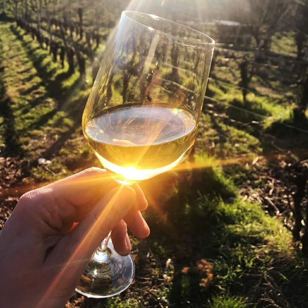 vina s soncem obsijana